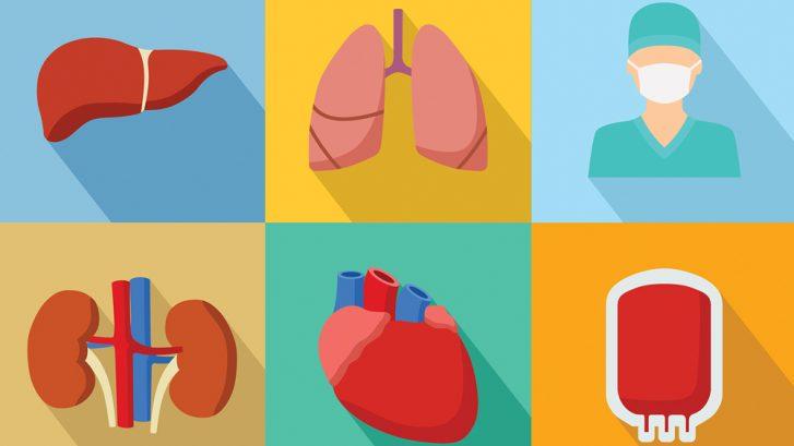 The Future of Organ Transplant
